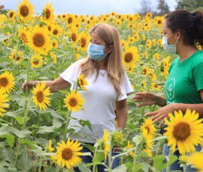 Lanzan la 'Ruta del Girasol' para activar el agroturismo en el departamento