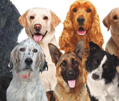 La inmensa importancia de los perros; a propósito de su Día internacional